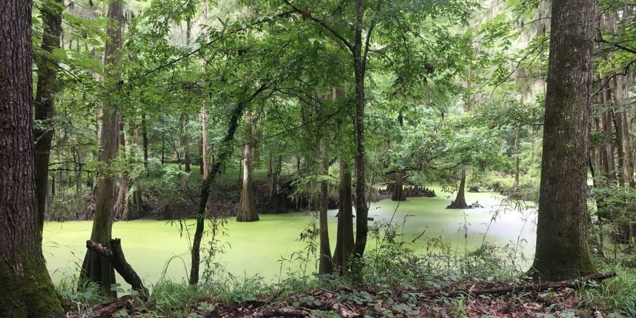 Reservoir Botanical Gardens and Nature Trail