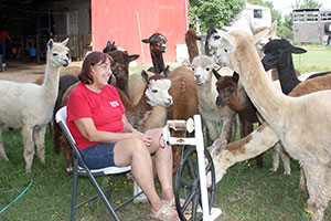 An…Alpaca Festival?