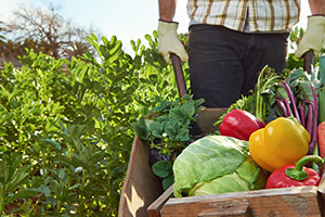 Picking the Healthy Choice: Becoming Part of the Farm-to-Table Movement
