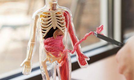 Random Stuff That Rocks: Squishy Human Body by Fat Brain Toys