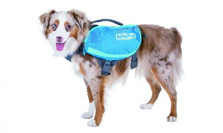 Random Stuff That Rocks: DayPak for Dogs by Outward Hound