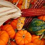 Native Peoples of the Delta: Celebrate Thanksgiving by Exploring Culture