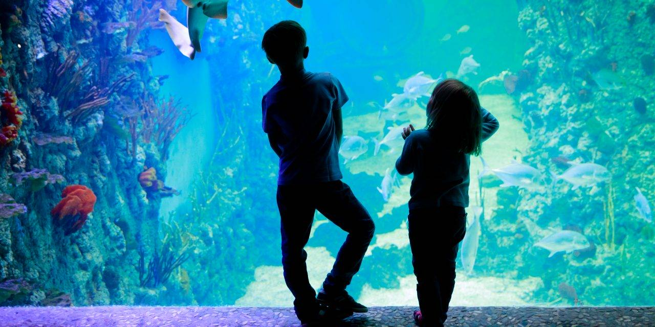 A Mississippi Aquarium Attraction Is in the Works for Gulfport