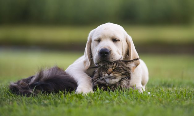 Pets Are Family, Too: Seven Things Every Pet Needs