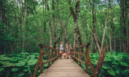 Family Fitness: Hiking Edition – Explore Northeast Mississippi's Many Trails for Fun Fitness for the Family