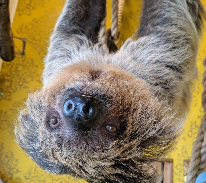 The Hattiesburg Zoo Misses You