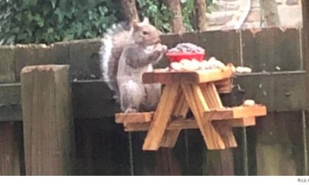 Man Builds a Picnic Table for a Squirrel While in Quarantine and Inspires People All Over to Do the Same
