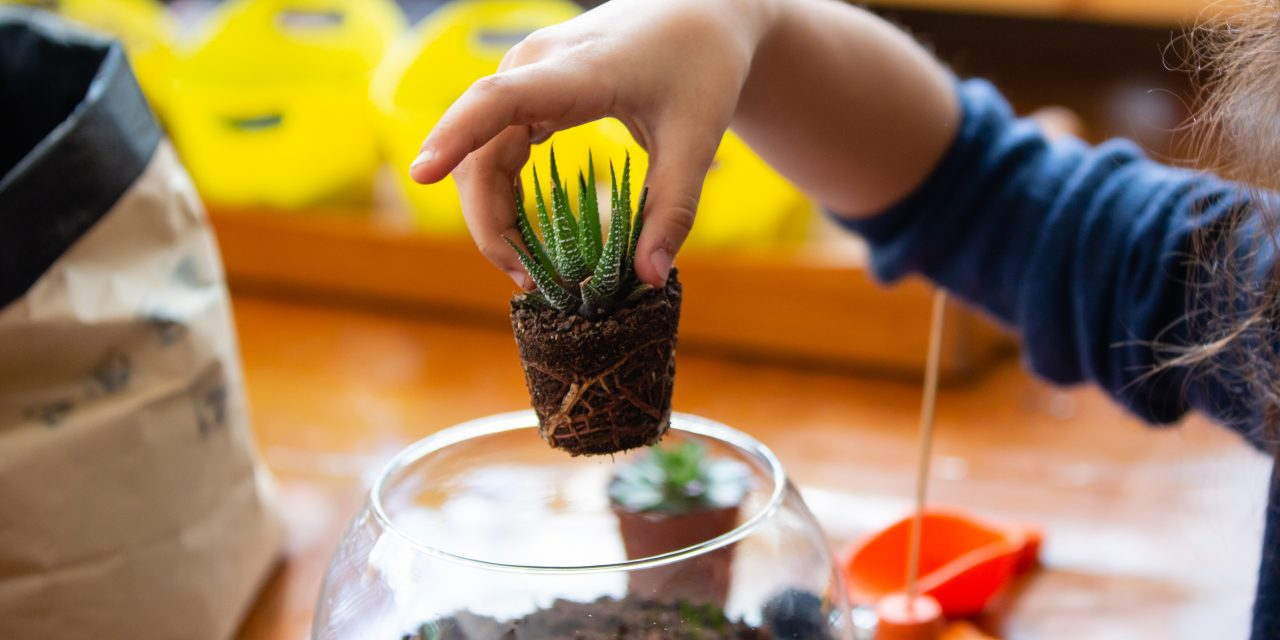 Social Distancing Boredom-Buster for Kids: Grow Plants from Cuttings!