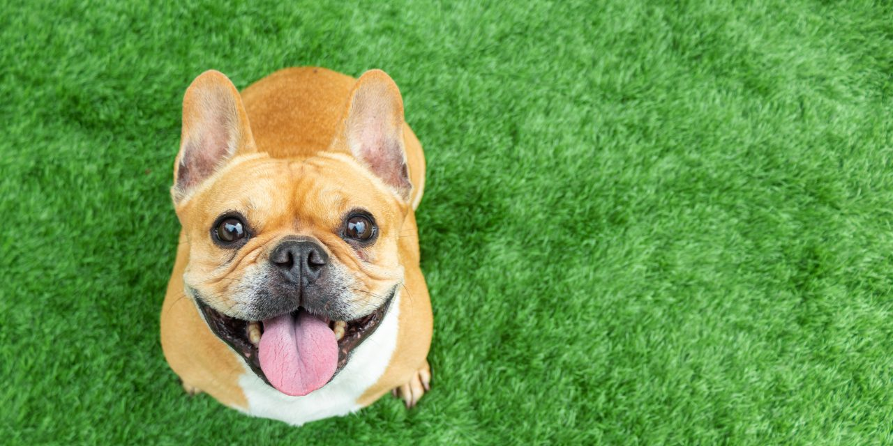 Dog and Cat Adoptions Skyrocket Due to Covid-19