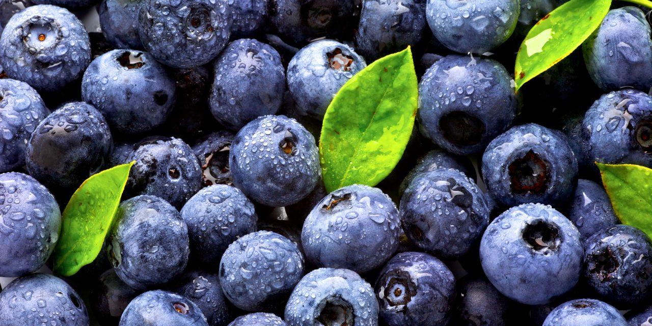 Blueberry Season is HERE!
