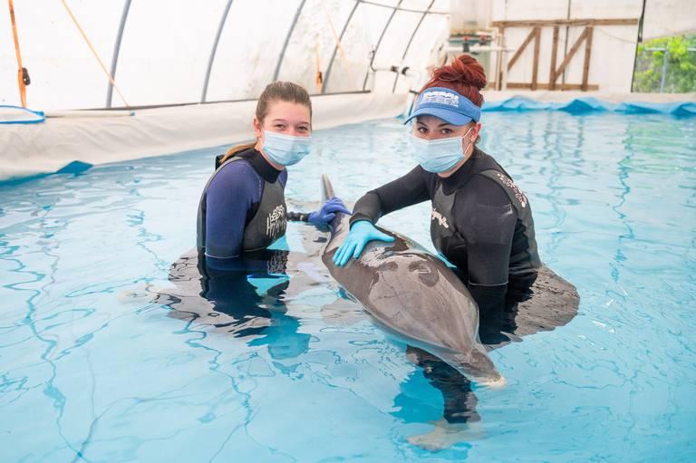 Dolphin Rescued on Gulf Coast Beach