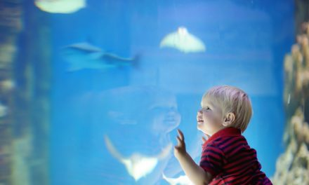 """Come """"Sea"""" the Mississippi Aquarium"""