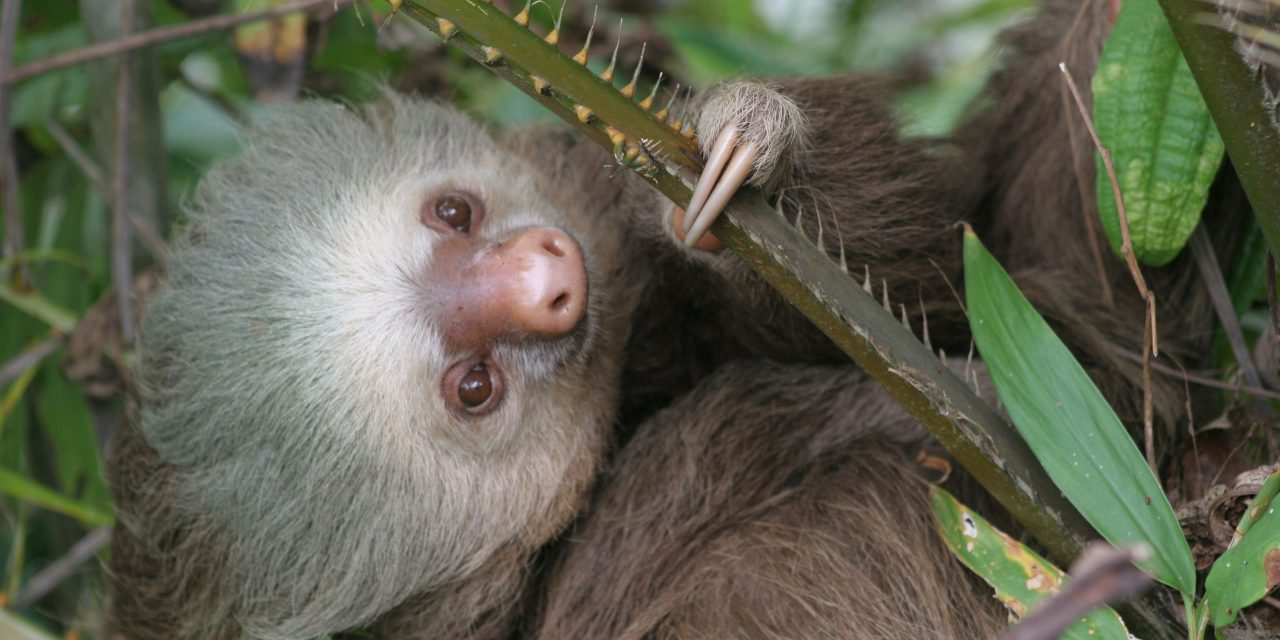 International Sloth Day and Contest